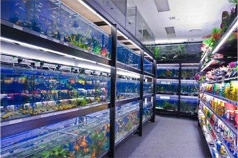 Wide Range of Tropical Fish