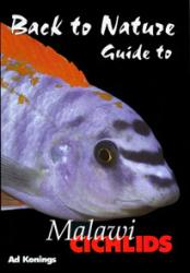 guide-to-malawi-cichlids